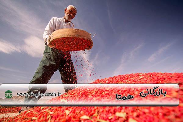 قیمت زرشک در تهران